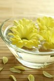 Yellow Flowers Floating In Bowl. Stock Photos