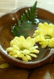 Yellow flowers floating in wooden bowl. Stock Photography