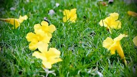 Yellow flowers Flower background. Dolly on yellow flowers Flower background stock footage