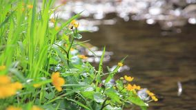 Yellow flowers in forest stock video footage