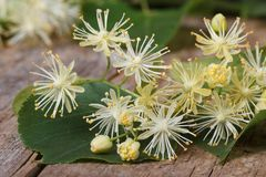 Yellow flowers fragrant linden macro. On a wooden table. horizontal Royalty Free Stock Image