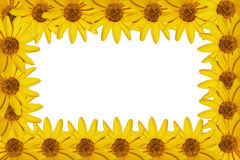 Yellow flowers frame. Isolated on a white background Royalty Free Stock Photo