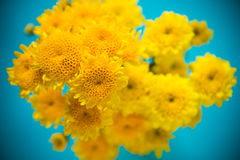 Yellow flowers is fresh Stock Photo