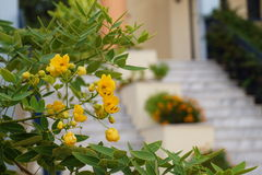 Yellow flowers in front of blurred stairs Stock Image