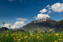 Yellow flowers in front of huge tyrol mountain Royalty Free Stock Photos