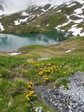 Yellow flowers in front of lake in the Swiss Alps Stock Photos