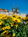 Yellow flowers in front of Maria's Church in Prague Royalty Free Stock Images