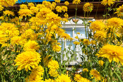 Yellow flowers in front of village house Stock Image