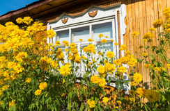 Yellow flowers in front of village house Stock Images