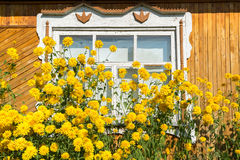 Yellow flowers in front of village house Royalty Free Stock Photos