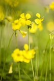 Yellow flowers in full bloom Stock Photo