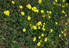 Yellow flowers full frame Royalty Free Stock Images