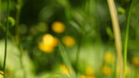 Yellow flowers. Full HD with motorized slider. 1080p. Stock Photo