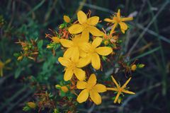 Yellow flowers. Garden yellow flowers Royalty Free Stock Images