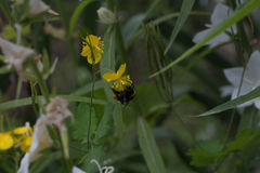 Yellow flowers in the garden with bug. Summer Stock Photography
