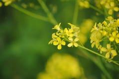 Yellow flowers in the garden stock photos