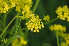 Yellow flowers in the garden stock photo