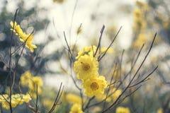 Yellow flowers at the garden in Vietnam. Yellow flowers at the garden in Dalat in Vietnam Royalty Free Stock Photos