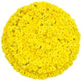 Yellow flowers garlands shaped in circle stock images