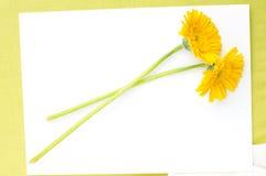 Yellow flowers of gerbera Royalty Free Stock Photo