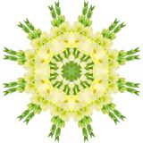 Yellow flowers gladiolus. In the form of a picture of a kaleidoscope Royalty Free Stock Image