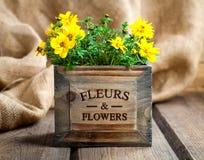 Yellow flowers Goldmarie Stock Photography