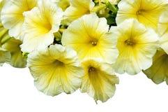 Yellow flowers gramophones Stock Image