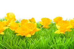 Yellow flowers on grass Royalty Free Stock Photo