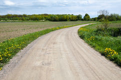 Yellow flowers at a gravel road Royalty Free Stock Photography