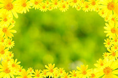 Yellow flowers and green background frame. In the image, there are many yellow flowers in the green abstract blurs background Stock Images