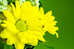 Yellow flowers on green background Stock Photo