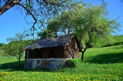 Yellow flowers. Green grass & and yellow flowers in the carpathian village Stock Photo