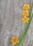 Yellow flowers and green grass on the old wood Stock Photos