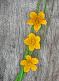 Yellow flowers and green grass on the old wood Royalty Free Stock Photography