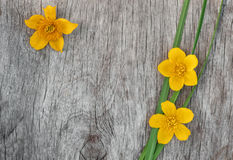 Yellow flowers and green grass on the old wood Royalty Free Stock Images