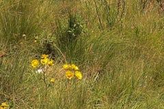 YELLOW FLOWERS IN GREEN GRASSLAND stock photos