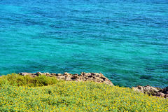 Yellow flowers. Growing next to the sea Royalty Free Stock Image