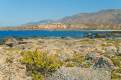 Yellow flowers growing on rocks Stock Images