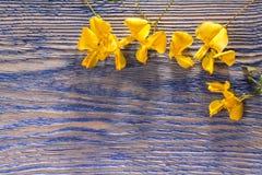 Yellow flowers on wood stock photo