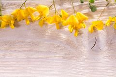 Yellow flowers on wood royalty free stock image