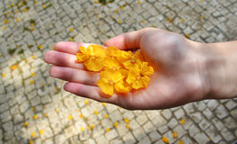 Yellow flowers in hand Royalty Free Stock Photography