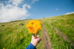 Yellow flowers in hand of a romantic tourist. Green grass mountains with dirt road and blue sky. Yellow flowers in hand of a romantic tourist. Green grass Stock Photo