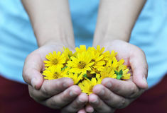 Yellow flowers in hands Stock Photography