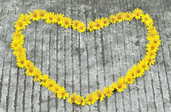 Yellow flowers in heart shape Stock Image