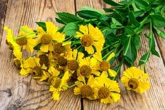 Yellow flowers of helenium garden Royalty Free Stock Photos
