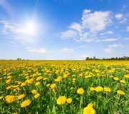 Yellow flowers hill under blue cloudy sky Stock Images