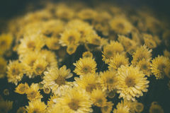 Yellow flowers. Image of yellow flowers Stock Photo