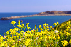Yellow flowers on island royalty free stock images