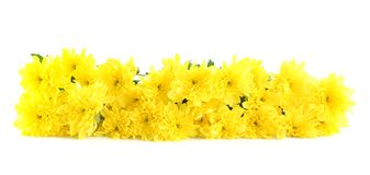 Yellow flowers, isolated. Stock Photos