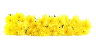 Yellow flowers, isolated. Stock Photos